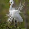 Maker:  Dwayne Anders<br /> Title:  Nest Building<br /> Category:  Wildlife<br /> Score: 13.5