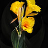 Maker:  Mike Smith<br /> Title:  Yellow Canna Lily<br /> Category:  Pictorial<br /> Score:  14