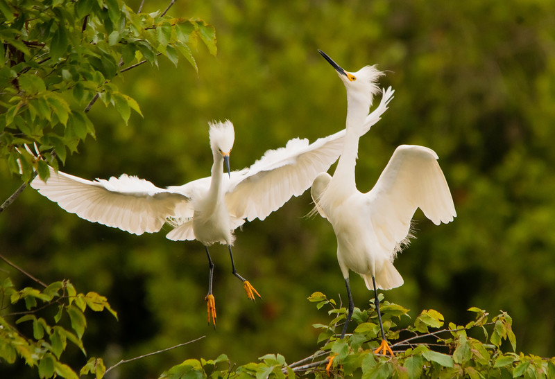 Maker:  Cindy Singletary<br /> Title:  Jefferson Island Flight<br /> Category:  Wildlife<br /> Score:  12