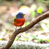 Maker: Cindy Singletary <br /> Title: Painted Bunting <br /> Category: Wildlife <br /> Score:  11.5