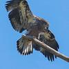 Maker:  Ronald Austin<br /> Title:  Perfect Landing<br /> Category:  Wildlife<br /> Score:  12