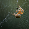 Maker:  Dirk Sanderson<br /> Title:  Spider on Web<br /> Category:  Macro<br /> Score:  12