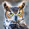 Maker:  Larry Phillips<br /> Title:  Great Horned Owl<br /> Category:  Pictorial<br /> Score:  14