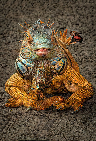 Maker:  Dale Lindenberg<br /> Title:  Iguana Look at that Butterfly<br /> Category:  Pictorial<br /> Score:  13