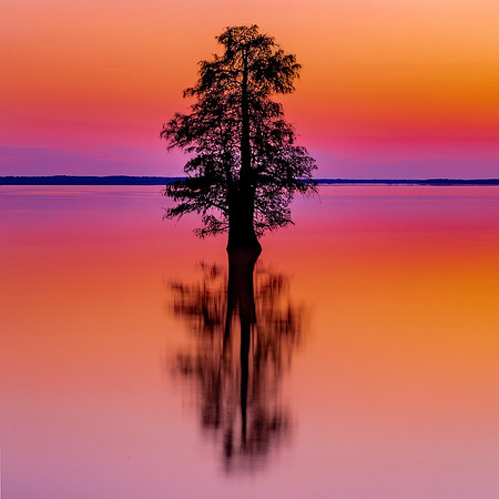 Maker:   Mike Smith<br /> Title:    Lone Tree @ Sunset<br /> Category:  Landscape/Travel<br /> Score:  13