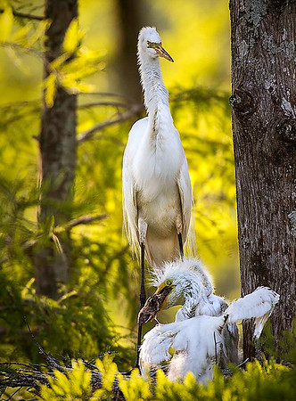 Maker:  Dwayne Anders<br /> Title:  Chick Feeding Time<br /> Category:  Wildlife<br /> Score:  12.5
