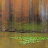 Maker:  Mike Smith<br /> Title:  Caddo Cypress with Bobber<br /> Category:  Pictorial<br /> Score:  13