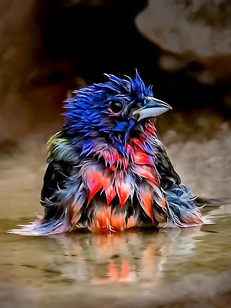Maker:  :  Dwayne Anders<br /> Title:  Bath time<br /> Category:  Pictorial<br /> Score:  14
