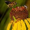 Maker:  Dale Lindenberg<br /> Title:  Bee, Bug, Spider<br /> Category:  Pictorial<br /> Score:  13.5