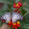 Maker:  Dale Lindenberg<br /> Title:  Butterfly<br /> Category:  Wildlife<br /> Score:  15