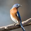 Maker:  Lee Davis<br /> Title:  Standing Guard<br /> Category:  Wildlife<br /> Score:  11.5
