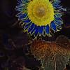 Maker:  Joel Coker<br /> Title:  Flower Power<br /> Category:  Altered Reality<br /> Score:  13