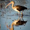 Maker:  Lee Davis<br /> Title:  Cool Reflections<br /> Category:  Wildlife<br /> Score:  11.5