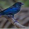 Maker:  Dale Lindenberg<br /> Title:  Cow Bird<br /> Category:  Wildlife<br /> Score:  12.5