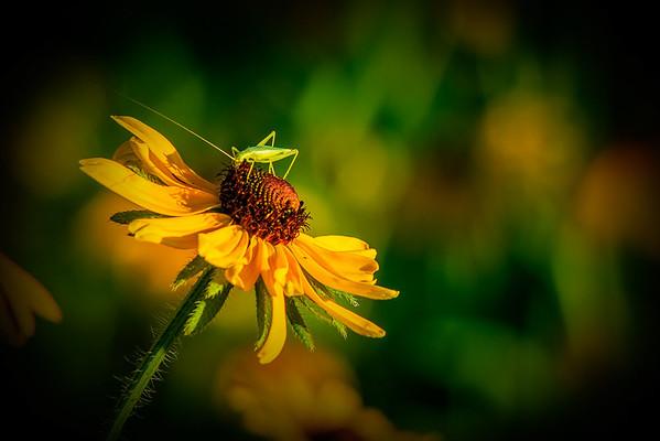 Maker:  Freeman Ligon<br /> Title:  Sunflower & Grasshopper<br /> Category:  Pictorial<br /> Score:  13.5