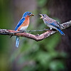 Maker:  Cindy Circu<br /> Title:  Feed Me<br /> Category:  Wildlife<br /> Score:  14.5