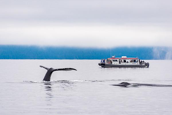 Maker:  Lee Davis<br /> Title:  Juneau Whale Watchers<br /> Category:  Landscape/Travel<br /> Score:  12