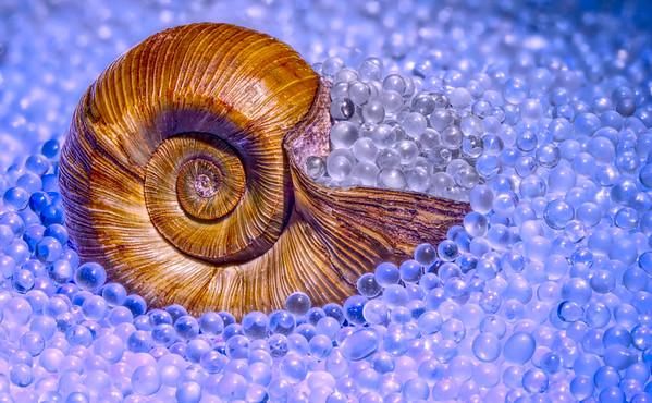 Maker:  Joel Coker<br /> Title:  Shell on Glass Study 3<br /> Category:  Macro/Close Up<br /> Score:  12.5