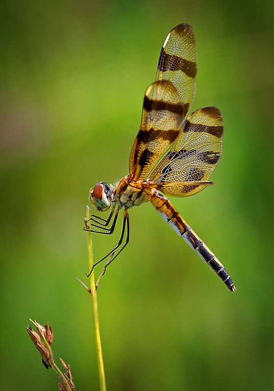 Maker:  Wayne Tabor<br /> Title:  Halloween Pennant<br /> Category:  Macro/Close Up<br /> Score:  13