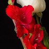 Maker:  Ronald Austin<br /> Title:  Red Lilies and White Rose<br /> Category:  Macro/Close Up<br /> Score:  12