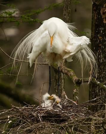 Maker:  Cindy Singletary  <br /> Title:  Mama Love<br /> Category:  Wildlife <br /> Score:  11.5