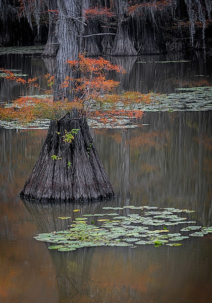 Maker:  Wayne Tabor<br /> Title:  Caddo Lake Scene 2<br /> Category:  Pictorial<br /> Score:  12.5
