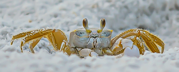 Maker:  Ed Blewer<br /> Title:  Crabby<br /> Category:  Pictorial<br /> Score:  11