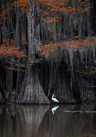 Maker:  Wayne Tabor<br /> Title:  Caddo Lake Scene 1<br /> Category:  Landscape/Travel<br /> Score:  13