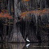 Maker:  Wayne Tabor<br /> Title:  Caddo Lake Scene 1<br /> Category:  Landscape/Travel<br /> Score:  13