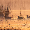 Maker:  Ronnie Maum<br /> Title:  Ducks at Dawn<br /> Category:  Pictorial<br /> Score:  13.5