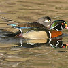 Maker:  Ronald Austin<br /> Title:  A Stroll Through the Pond<br /> Category:  Wildlife<br /> Score:  12