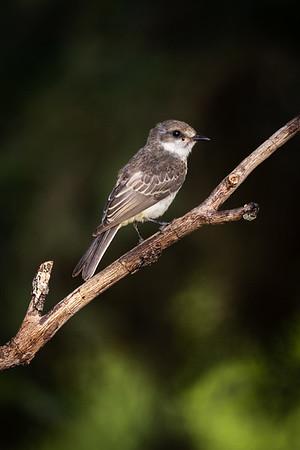 Maker:  Ricky Scroggins<br /> Title:  Unknown Bird<br /> Category:  Wildlife<br /> Score:  13
