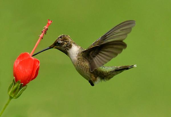 Maker:  Ronald Austin<br /> Title:  Sweet Nectar<br /> Category:  Wildlife<br /> Score:  13