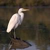 Maker:  Joel Coker<br /> Title:  Morning Watch<br /> Category:  Wildlife<br /> Score:  11