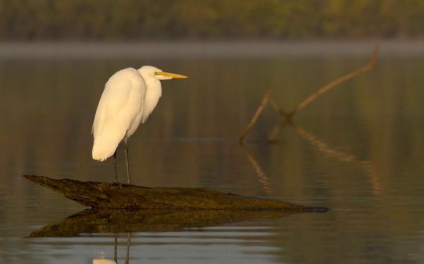 Maker:  Joel Coker<br /> Title:  Morning Glow<br /> Category:  Wildlife<br /> Score:  11
