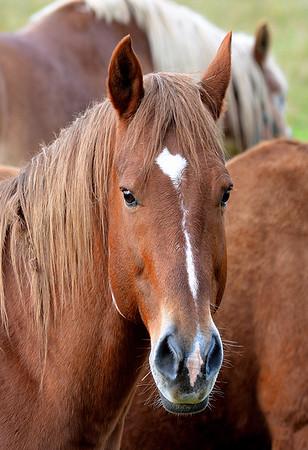 Maker:  Ronald Austin<br /> Title:  Horse Head<br /> Category:  Pictorial<br /> Score:  11