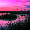 Maker:  Wayne Tabor<br /> Title:  Marsh Sunset<br /> Category:  Pictorial<br /> Score:  12