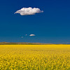Maker:  Wayne Tabor<br /> Title:  Cloud over Canola<br /> Category:  Pictorial<br /> Score:  11