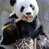 Maker:  Mike Blau<br /> Title:  Lunchtime for Panda<br /> Category:  Pictorial<br /> Score:  12