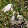Maker:  Cindy Singletary<br /> Title: Feeding Her Babies<br /> Category: Wildlife<br /> Score:  11.5