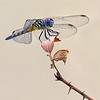 Maker:  Brent Reed<br /> Title:  Dragon and Thorns<br /> Category:  Wildlife<br /> Score:  13.5