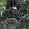 Maker:  Ronnie Maum<br /> Title: Wild and Free<br /> Category: Wildlife<br /> Score:  12.5