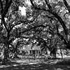 Maker:  Mark Walker<br /> Title:  Oakland Plantation<br /> Category:  Black & White<br /> Score:  11.5