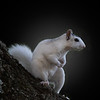 Maker:  Danny Haddox<br /> Title:  Brave Squirrel<br /> Category:  Pictorial<br /> Score:  12