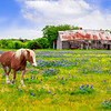 Maker:  Larry Phillips<br /> Title:  Strolling in Flowers<br /> Category:  Pictorial<br /> Score:  13.5