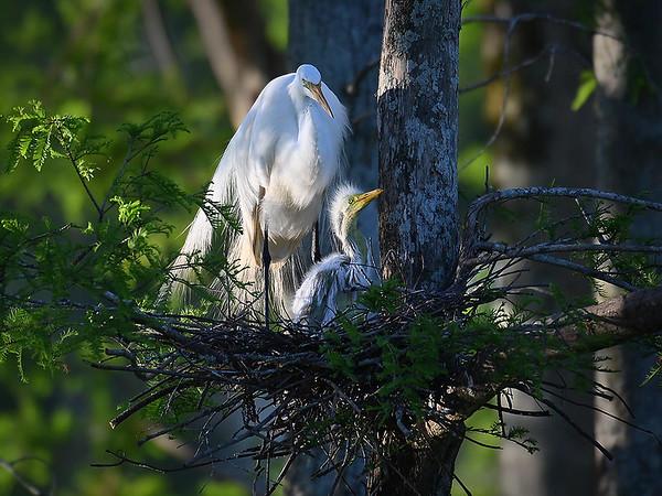Maker:  Dwayne Anders<br /> Title:  Mom & Chick<br /> Category:  Wildlife<br /> Score:  13