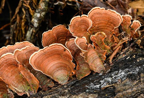 Maker:  Ronald Austin<br /> Title:  Woodland Mushrooms<br /> Category:  Pictorial<br /> Score:  12.5