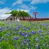 Maker:  Larry Phillips<br /> Title:  Blue Bonnets #2<br /> Category:  Pictorial<br /> Score:  12
