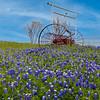 Maker:  Larry Phillips<br /> Title:  Blue Bonnets #1<br /> Category:  Pictorial<br /> Score:  13