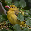 Maker:  Debbie Oxner<br /> Title:  Bird & Berry<br /> Category:  Wildlife<br /> Score:  13